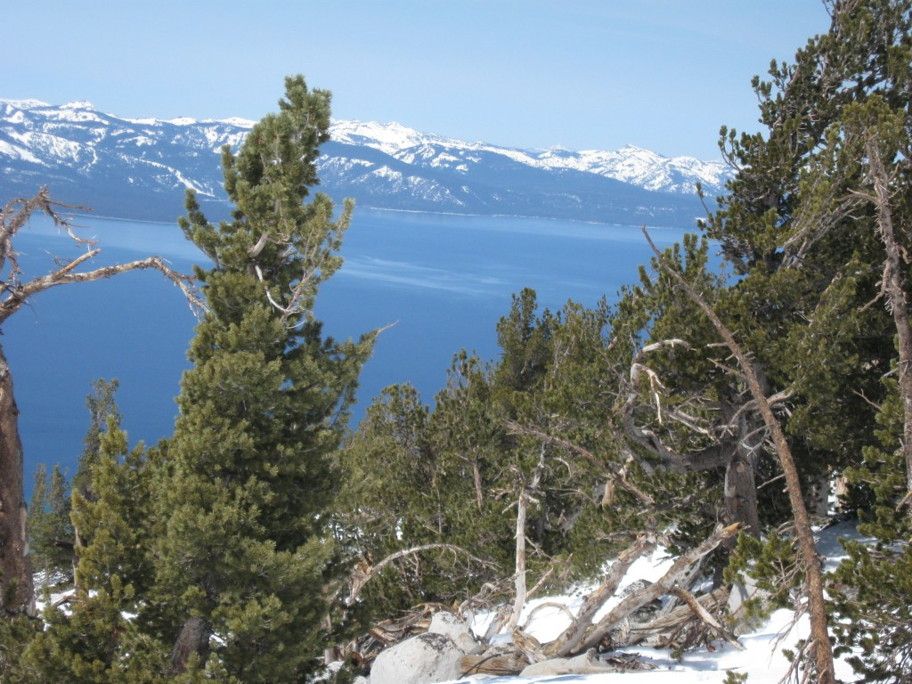 lake_tahoe_skiing_trees_ca