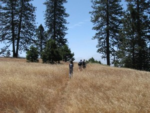 hiking_henry_coe