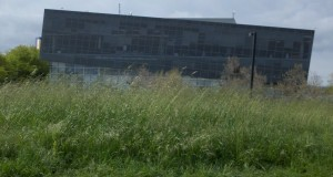 View Of Google from the Weeds